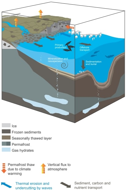 Illustration of the sedimentary model in the studied environment